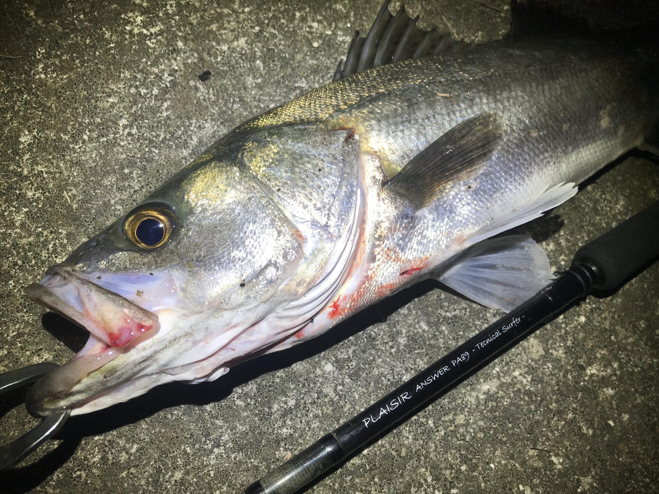 【釣果間違いなし!】ドブ川シーバスを釣るためのポイントとは