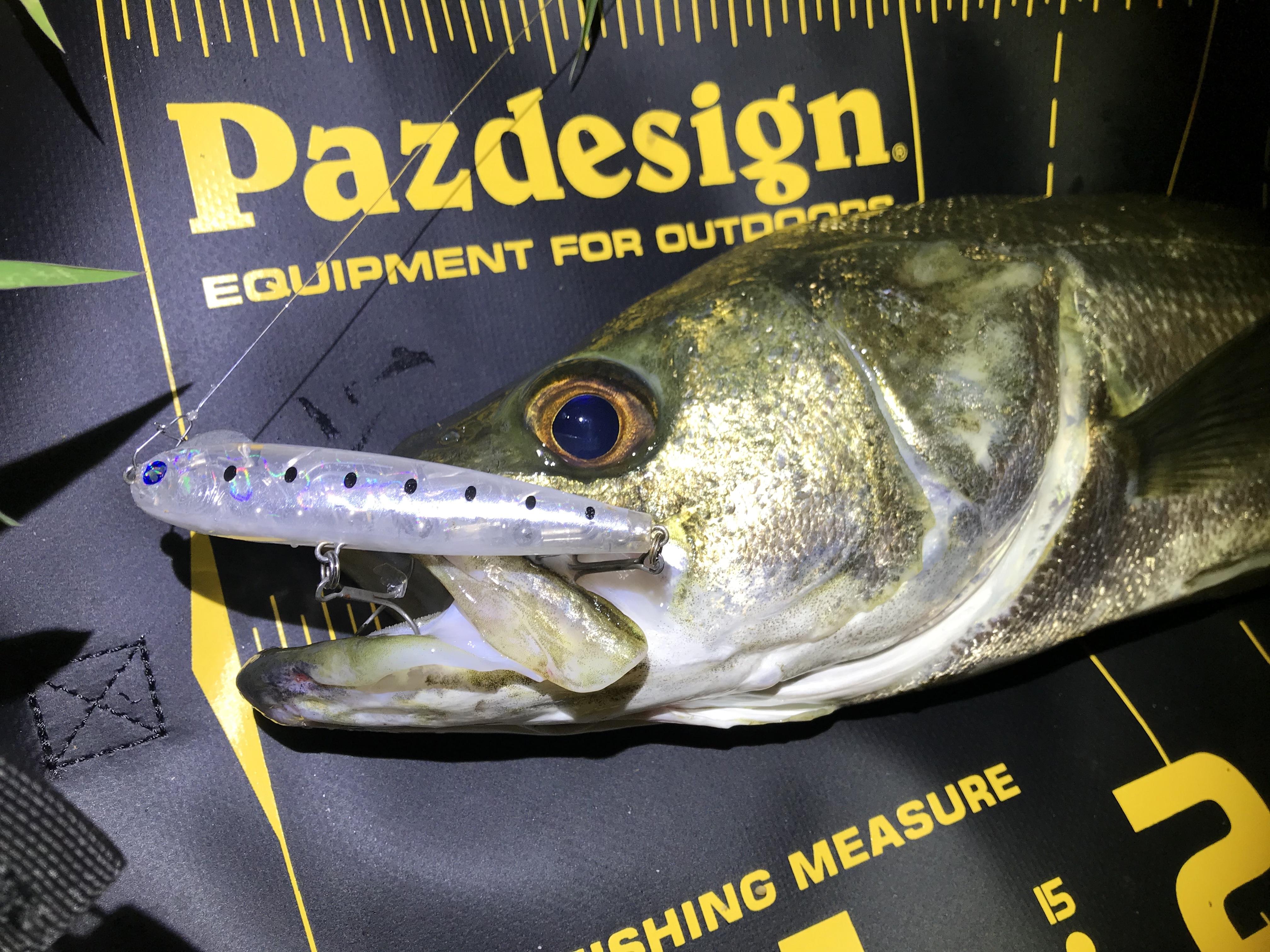 計測だけじゃない!パズデザイン プロテクトメジャーは魚保護も◎